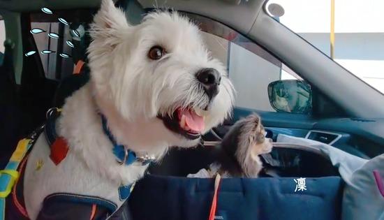 【動画】ビビりな犬 ~洗車機編~