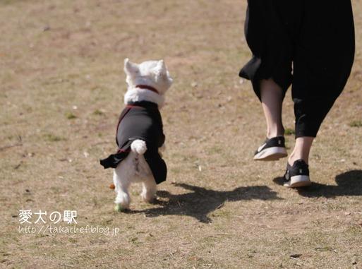 【犬旅】愛犬の駅