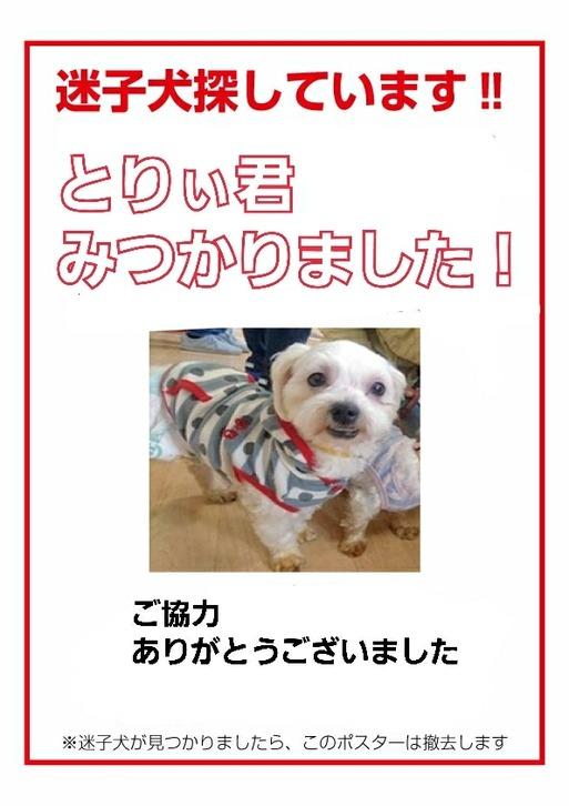 【犬】とりぃ君物語 ~あたしなりの奮闘記編~