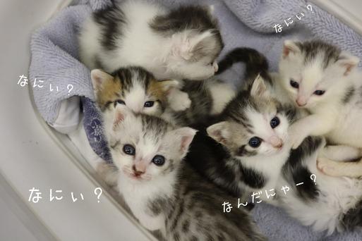 【猫】里親募集の猫たちの続き。