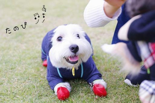 【犬旅】&WANに来たぞ。