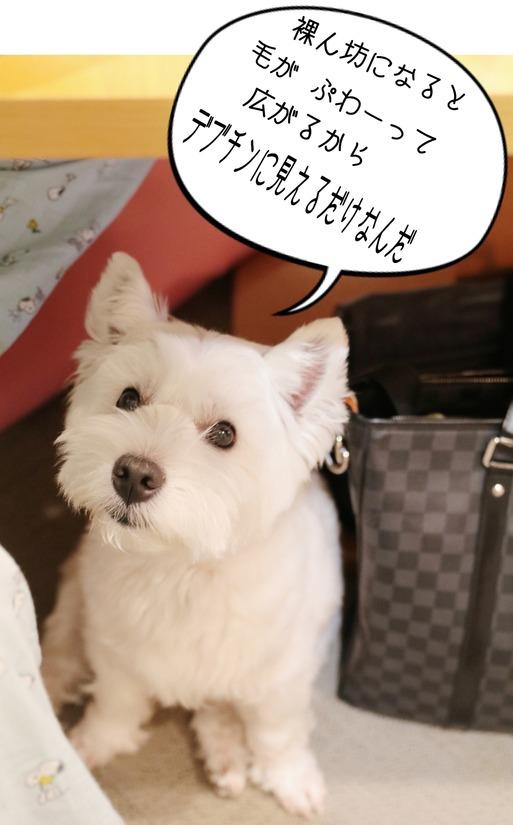 【犬】腸内フローラ を調べてみたよ。