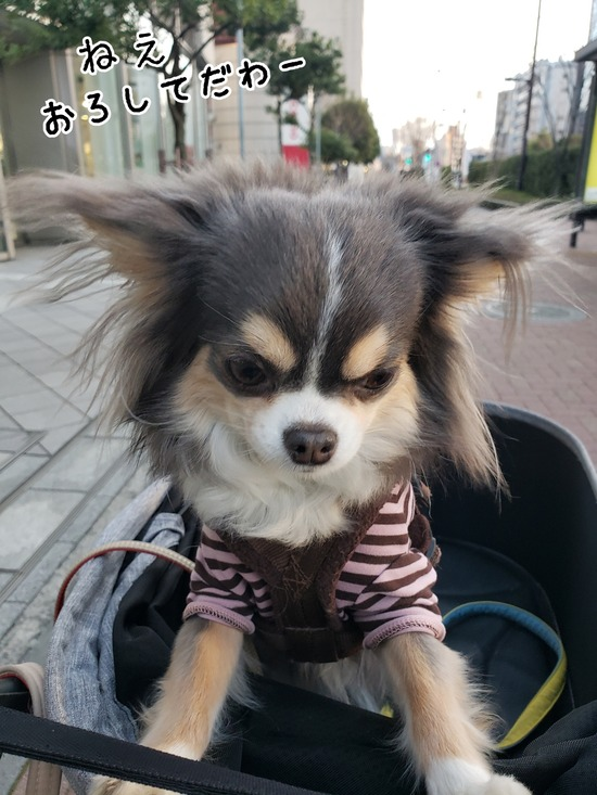 【犬】まりちゃんの主張。
