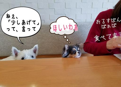 【犬】お留守番ばぁば登場