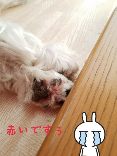 【犬】ガーン、ガーンガーン