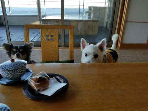 【伊豆旅行】ウエルカムお菓子をねらう2ぴき