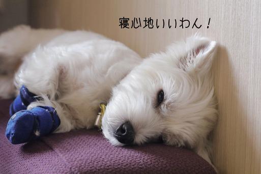 【犬】我が家のソファーを選ぶ基準