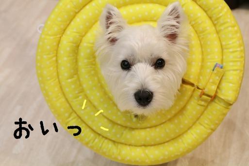 【犬グッズ】こんにゃろ~  エリザベスカラー編