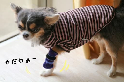 【犬】まりちゃん、お前もか・・・。