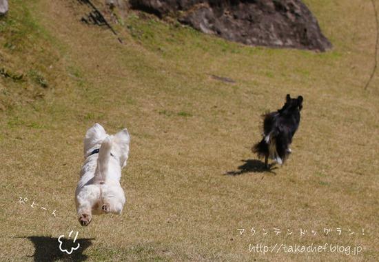 【犬とおでかけ】無事到着!