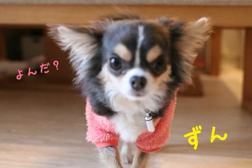 【犬】ずんずん