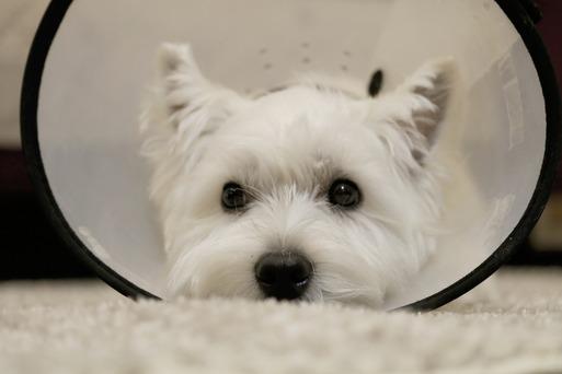【犬グッズ】エリザベスカラー と、日記:三円のために