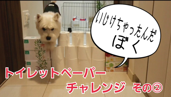 【犬動画】トイレットペーパーチャレンジ その②