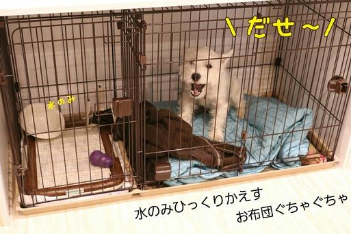 【犬】今日のありえない・・・。
