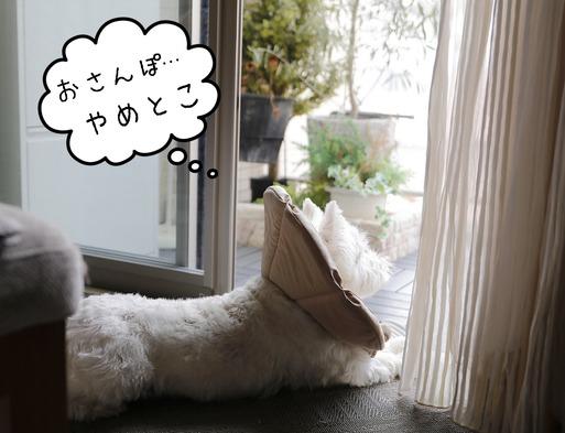 【日記】雨の日