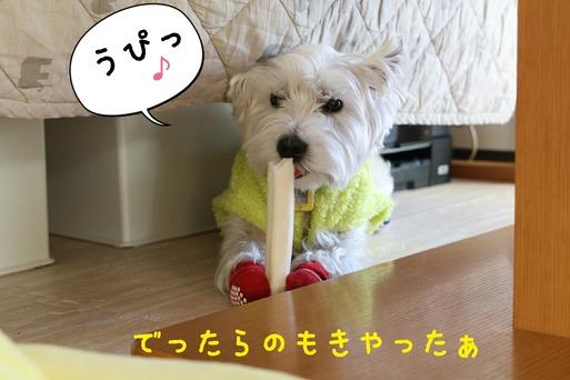 【犬】ゆきちの日記  ~でったらのもきやったぁ~