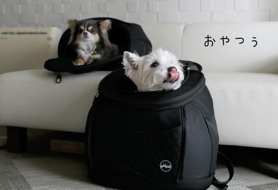 【犬グッズ】リュックの検討 その②