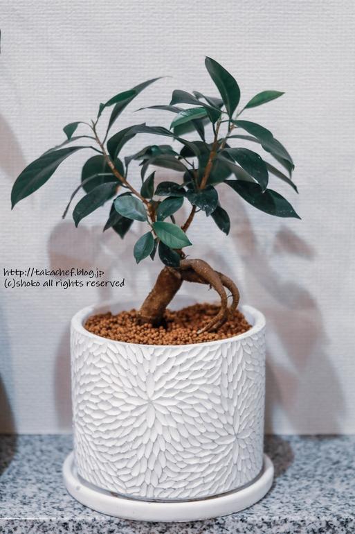 【日記】ブランカの木を植え替えるぞ! ~フラワーパークで植木鉢を探す~