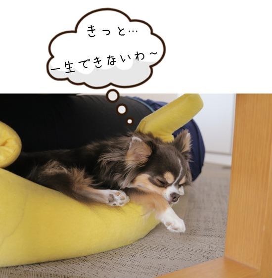 【日記】フラフープ と、それに付き合う犬。