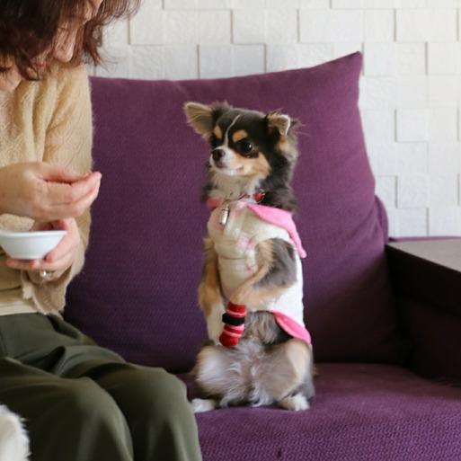 【犬】お留守番ばぁばがやってくる