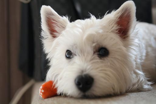 【犬】飼い主