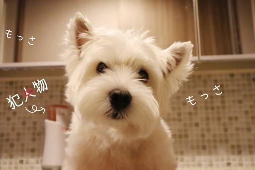 【ウエスティ&チワワ】お風呂ものがたり。チャッカチー現る。