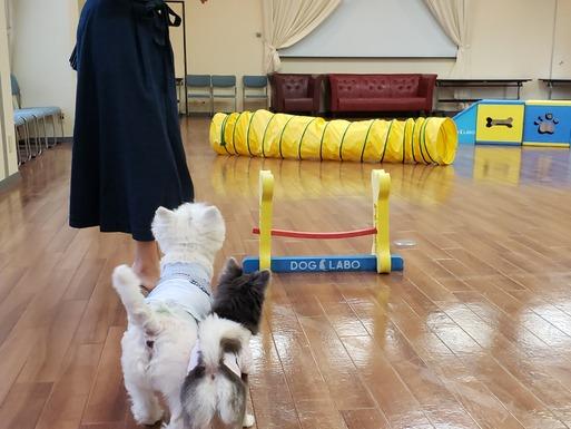 【犬と旅】ビワドッグの室内ドッグランで遊んだよ