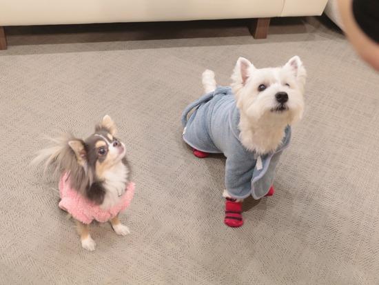 【犬】初ぶろ