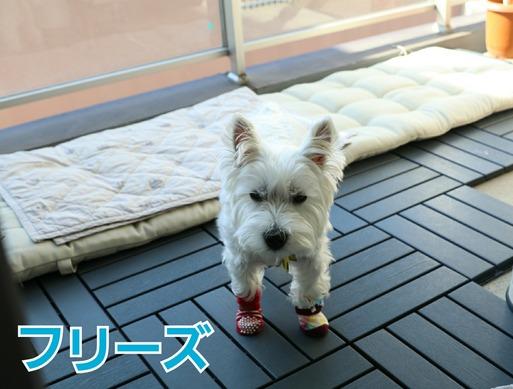 【犬】ベランダ計画