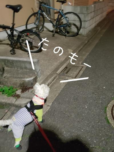 【犬】お散歩。ニャンコロードに突入する