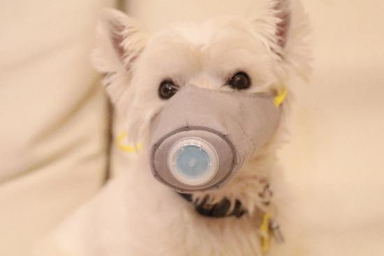 【犬】ペットからコロナ陽性がでた件を考える
