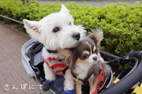 【犬】幸せボケしているお顔ってどんなお顔だ?