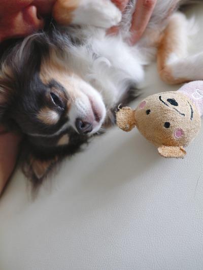 同じ格好で寝る飼い主と飼い犬