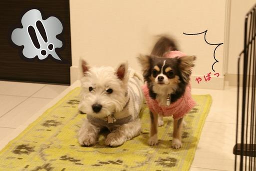 【犬】玄関マット