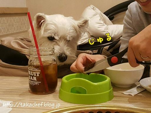【犬とおでかけ】お台場 うしすけへ焼肉を食べに行く。