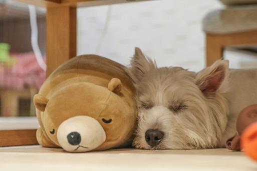 眠い我が家・・・。