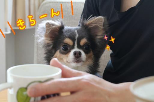 【犬】わかりやすい犬