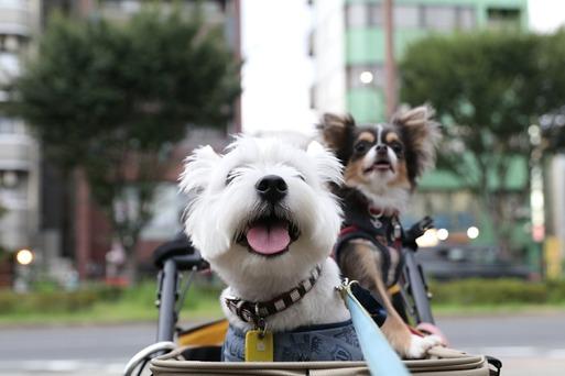 【犬】お散歩になりゃしない・・・