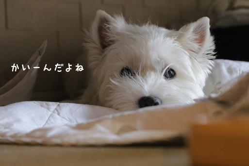 """【漢方】新漢方を飲んで10日目 またまた""""めんげん""""反応か?"""