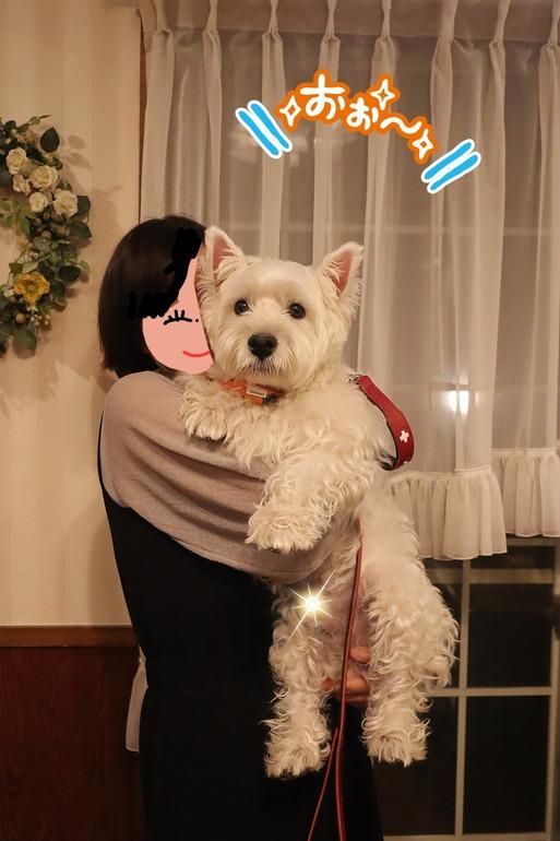 【犬旅】ごはんターイム!