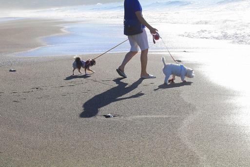 【犬と旅】あさんぽ。海編