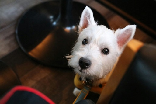 【伊豆旅行】愛犬の駅