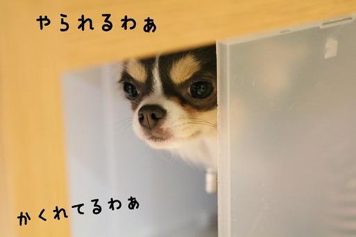 【犬】かわいい敵