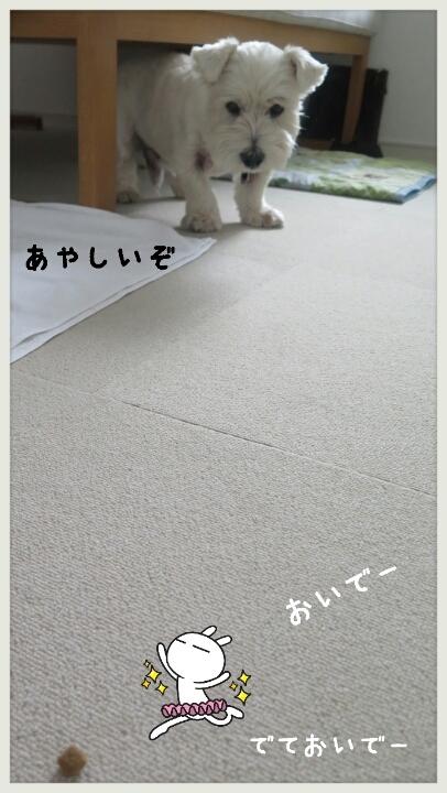 【犬】注射