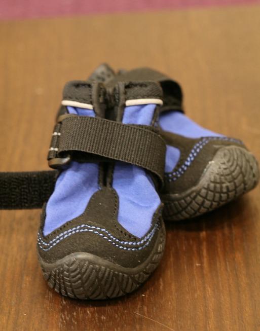 【犬靴】 靴物語⑪ ~サイズに悩む