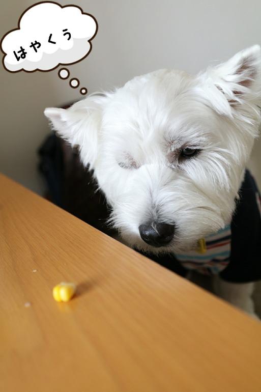 【犬】おりこうじゃん!!