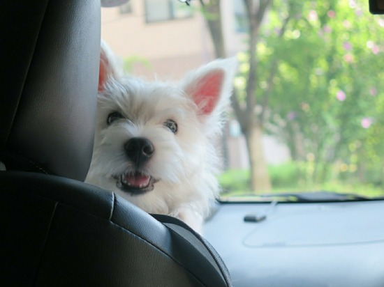 【犬】再会!!と、人のこと言えんぞ!
