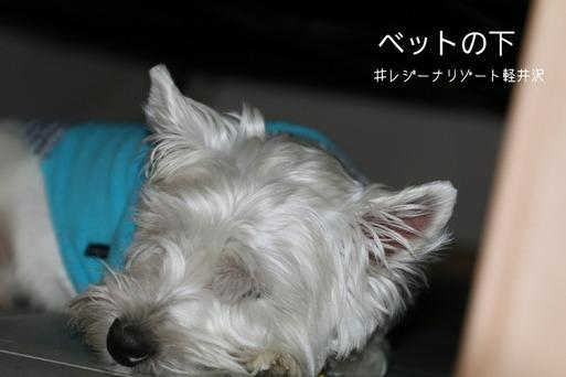 【犬旅】寝床・・・。