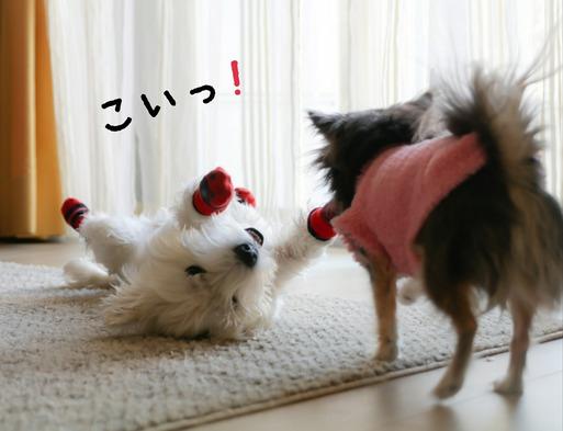 【犬】へそてん。