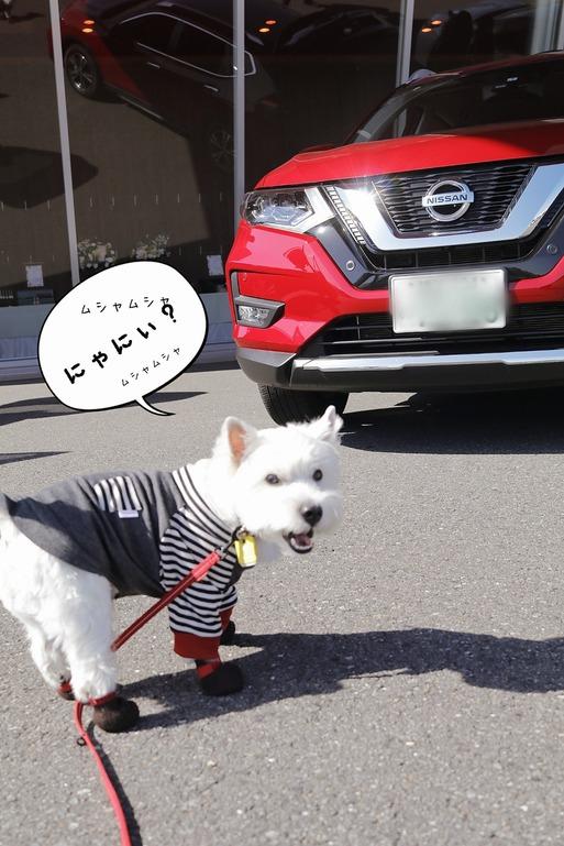 【わんわん同乗 日産ブロガー試乗会 】その① 写真とれないよ編